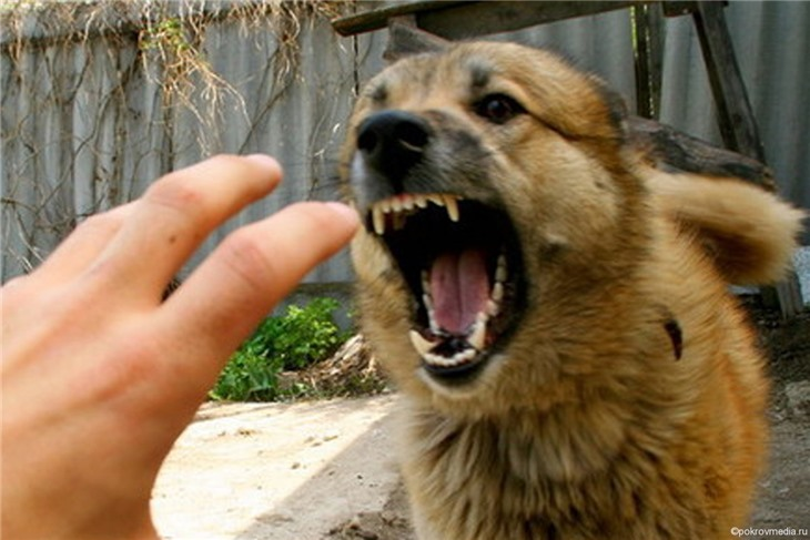 Скандал в Канаде: ребенка лечили слюной бешеной собаки