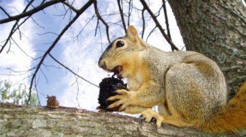 Житель США скончался из-за экзотического блюда из мозга белки