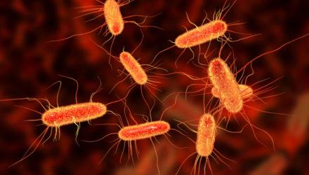 Резистентность к антибиотикам — современная проблема общества