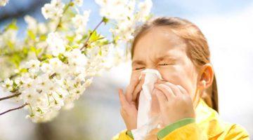 Как предотвратить аллергию на пыльцу